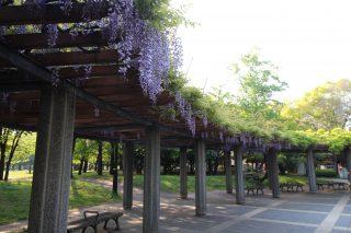清澄庭園②